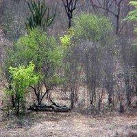 Vegetação nordestina: cactos