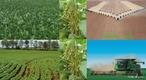Soja é um grão rico em proteínas, cultivado como alimento tanto para humanos quanto para animais. A soja pertence à família Fabaceae (leguminosa), assim como o feijão, a lentilha e a ervilha. A palavra soja vem do japonês shoyu. A soja é originária da China.  </br></br>  Palavras-chave: Dimensão econômica. Território. Lugar. Região. Agricultura. Soja. Exportação. Óleo de soja.
