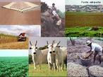 Agropecuária reúne os substantivos agricultura e pecuária. É portanto a área do setor primário responsável pela produção de bens de consumo, mediante o cultivo de plantas e da criação de animais como gado, suínos, aves entre outros.  </br></br> Palavras-chave: Dimensão socioambiental. Dimensão econômica. Dimensão demográfica do espaço geográfico. Território. Lugar. Região. Economia. Agropecuária. Agricultura. Plantio agrícola. Máquinas agrícolas. Economia. Pecuária. Gado de corte.