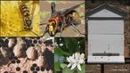 As abelhas representam a fonte de renda para muitos minifundiários (pequenos agricultores), principalmente em casos de agricultura familiar. Por meio da apicultura se produz mel, cera, própolis e outros produtos. </br></br> Palavras-chave: Dimensão econômica. Apicultura abelhas. Agricultura familiar. Apicultura. Mel. Própolis.