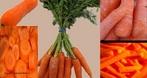 A cenoura é uma raiz tipicamente cor de laranja, com uma textura lenhosa. As cenouras são grandes fontes de fibra dietética, antioxidantes, minerais. Este último, responsável pela coloração alaranjada característica do vegetal, é uma provitamina A (substância que dá origem à vitamina A dentro de um organismo vivo).  </br></br>  Palavras-chave: dimensão socioambiental. Dimensão econômica. Lugar. Região. Território. Agricultura. Cenoura. Vitaminas. Economia. Hortifrutigranjeiro.