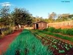 Hortifrutigranjeiros é uma atividade ligada a plantação de hortaliças, legumes e frutas, sendo uma ótima fonte de renda para pequenas propriedades.  </br></br> Palavras-chave: Dimensão econômica. Dimensão demográfica e cultural. Dimensão spcopambiental. Horti. Fruti. Granjeiros. Hortifrutigranjeiros. Frutas. Legumes. Verduras. Produtor. Distribuidoras. Supermercados. Cooperativas. Associações. Ceasas.