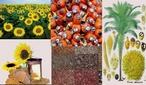 Óleos vegetais são extraídos de diversas plantas, como: o coco, o girassol, o milho, a granola, entre outros. O óleo vegetal é uma gordura extraída de plantas formadas por triglicerídio. Apesar de, em princípio, outras partes da planta poderem ser utilizadas na extração de óleo, na prática este é extraído na sua maioria (quase exclusivamente) das sementes.  </br></br>  Palavras-chave: Dimensão econômica do espaço geográfico. Território. Lugar. Região. Agricultura. Óleos vegetais.