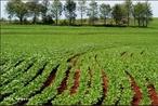 Agricultura é o conjunto de técnicas utilizadas para cultivar plantas. Atualmente é utilizada a mecanização com o uso de máquinas para semear, adubar, colher.  </br></br>  Palavras-chave: Dimensão socioambiental. Dimensão política. Dimensão demográfica. Dimensão econômica. Território. Lugar. Região. País. Mecanização. Agricultura. Plantio. Cereais.