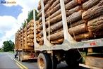 O termo reflorestamento tem sido utilizado para todo o tipo de implantação plantio de áreas desmatadas.  </br></br>  Palavras-chave: Dimensão socioambiental. Dimensão econômica. Dimensão demográfica e cultural do espaço geográfico. Território. Lugar. Região. Países. Reflorestamento. Silvicultura. Papel. Consumo. Madeira.