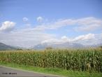 O milho é um conhecido cereal cultivado em grande parte do mundo. É extensivamente utilizado como alimento humano ou ração animal, devido às suas qualidades nutricionais.  </br></br>  Palavras-chave: Agricultura. Milho. Ração animal. Alimento humano.