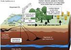 Sequestro de carbono é um processo de remoção de gás carbônico. Tal processo ocorre principalmente em oceanos, florestas e outros organismos que, por meio de fotossíntese, capturam o carbono e lançam oxigênio na atmosfera. É a captura e estocagem segura de gás carbônico (CO2), evitando-se assim sua emissão e permanência na atmosfera terrestre.  </br></br> Palavras-chave: Sequestro de Carbono. Gás Carbônico. Florestas. Oceanos. Atmosfera. Oxigênio. Emissão de Poluentes. Desenvolvimento. Indústria. Queima de Petróleo.