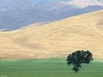 O termo pradaria ou campo engloba ambientes abertos que diferem muito um com o outro: as estepes da Sibéria ocidental, as grandes planícies da América do Norte, as savanas da Índia e da África, os pampas da América do Sul, os cerrados do Brasil, e mesmo áreas florestadas que foram derrubadas para agricultura ou pastoreio. </br></br>Todos esses campos são cobertos por gramíneas e outras plantas adaptadas às chuvas irregulares, como na Europa e na América do Norte, ou a chuvas estacionais, como as chuvas das monções na Ásia e as chuvas de inverno na África. </br></br> Palavras-chave: Biomas. Savanas. Pampas. Pradarias. Campos. Chuvas. Gramíneas. Vegetação.