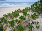 É o conjunto de dunas e areais distribuídos ao longo do litoral brasileiro e por várias partes do mundo. Geralmente é revestida de vegetação baixa, criando variações climáticas, o que confere grande diversidade ambiental e biológica. No Brasil, chama-se restinga um terreno arenoso e salino, próximo ao mar e coberto de plantas herbáceas características.   </br></br>  Palavras-chave: Ecossistema. Litoral. Brasil. Vegetação. Restinga.
