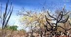 Caatinga (do Tupi-Guarani: caa (mata) + tinga (branca) = mata branca), é o único bioma exclusivamente brasileiro, o que significa que grande parte do seu patrimônio biológico não pode ser encontrado em nenhum outro lugar do planeta. A caatinga ocupa uma área de cerca de 750.000 km², cerca de 11% do território nacional englobando de forma contínua parte dos estados do Maranhão, Piauí, Ceará, Rio Grande do Norte, Paraíba, Pernambuco, Alagoas, Sergipe, Bahia e parte do Norte de Minas Gerais (Sudeste do Brasil).  </br></br> Palavras-chaves: Dimensão Socioambiental. Econômica. Demográfica do Espaço Geográfico. Natureza. Bioma. Região. Território. Lugar. Vegetação. Caatinga. Semiárido. Pobreza. Economia.