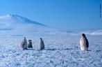 O pinguim é a ave característica da região Antártida, habita em numerosos bandos as ilhas e o continente, onde formam colônias. As aves mais comuns são os pinguins, os albatrozes e os petréis. </br></br> Palavras-chave: Pinguins. Aves. Fauna. Neve. Frio.