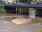 Processo em que ocorre eros�o nas margens de um rio e o material � depositado no fundo em seu leito. </br></br> Palavras-chave: Rio. Eros�o. Mata Ciliar. Sedimentos. Assoreamento. Polui��o. Desmatamento. Agricultura.