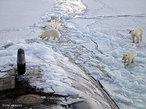 Banquisa ou banco de gelo � �gua do mar gelada, que come�a a formar-se aos -2�C, originando uma camada delgada que se quebra facilmente. Os peda�os maiores engrossam e aglomeram-se, recolhendo na periferia os peda�os mais pequenos: � um gelo em placas. </br></br> Palavras-chave: Banquisa. �gua. Mar. Gelo. Regi�es Polares.
