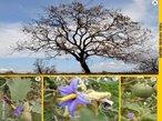 O Bioma Cerrado localiza-se principalmente no Planalto Central do Brasil. Ocupa 24% do território nacional, pouco mais de dois milhões de km². Segundo estudos atuais, restam 61,2% desse total, em áreas distribuídas no Planalto Central e no Nordeste, estando a maior parte na região Meio-Norte, nos estados do Maranhão e do Piauí. Existem áreas de Cerrado também em Rondônia, Roraima, Amapá, Pará, bem como em São Paulo. É a segunda maior formação vegetal brasileira depois da Amazônia. É também a savana tropical mais rica do mundo em biodiversidade. </br></br> Palavras-chave: Bioma. Cerrado. Vegetação. Amazônia. Savana. Biodiversidade. Desmatamento.