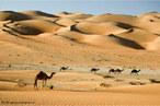 O deserto é uma região em que ocorre pouca quantidade de chuva. Em virtude desta situação climática, a umidade é muito baixa e pouca vegetação se desenvolve. Nestas condições, a vida torna-se complicada para seres humanos e outras espécies animais. </br></br> Palavras-chave: Bioma. Deserto. Chuva. Vegetação. Clima. Umidade.
