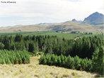 A Taiga é um tipo de floresta tipicamente do hemisfério norte do planeta, em regiões onde a temperatura chega a -54ºC e raramente passa dos 21ºC. Também conhecida como Floresta de Coníferas, ou Floresta Boreal, a Taiga perfaz uma faixa que abrange a Ásia, América do Norte e Europa e está limitada ao norte com a Tundra, e ao sul com a Floresta Temperada. A vegetação da taiga apresenta uma boa adaptação ao clima extremamente frio dessas regiões. </br></br> Palavras-chave: Taiga. Floresta Boreal. Floresta de Coníferas. Vegetação. Clima.