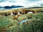 """A tundra é uma vegetação proveniente do material orgânico que aparece no curto período de degelo durante a estação """"quente"""" das regiões de clima polar, apresentando assim apenas espécies que se reproduzem rapidamente e que suportam baixas temperaturas. Essa vegetação é um enorme bioma que ocupa aproximadamente um quinto da superfície terrestre. Aparece em regiões como o Norte do Alasca e do Canadá, Groenlândia, Noruega, Suécia, Finlândia e Sibéria. </br></br> Palavras-chave: Tundra. Vegetação. Clima Polar. Bioma. Degelo."""