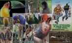 É um tipo de pirataria moderna. Não é apenas o contrabando de diversas formas de vida da flora e fauna, mas principalmente, a apropriação e monopolização dos conhecimentos das populações tradicionais no que se refere ao uso dos recursos naturais. </br></br> Palavras-chaves: Dimensão Socioambiental. Demográfica. Econômica e Cultural do Espaço Geográfico. Território. Lugar. Região. País. Floresta amazônica. Mata atlântica. Biopirataria. Aves. Fauna. Flora.
