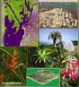 Paisagens da regi�o centro-oeste do Brasil mostrando o cerrado - imagens de sat�lite. </br></br>  Palavras-chave: Cerrado. Pantanal. Regi�o Centro-Oeste. Brasil. Clima. Vegeta��o. Biomas.