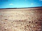 Desertifica��o � o fen�meno que corresponde � transforma��o de uma �rea num deserto. Segundo a Conven��o das Na��es Unidas de Combate � Desertifica��o, ela � &quot;a degrada��o da terra nas regi�es �ridas, semi-�ridas e sub-�midas secas, resultante de v�rios fatores, entre eles as varia��es clim�ticas e as atividades humanas&quot;. </br></br> Palavras-chave: Fen�meno. Desertifica��o. Deserto. Regi�es �ridas. Varia��es Clim�ticas. Desmatamento. Agricultura. Pecu�ria.