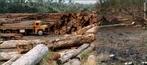 O desmatamento da floresta amazônica provoca problemas sérios ao meio ambiente, como a morte ou até mesmo a extinção de espécies da fauna e da flora. Um levantamento feito pelo Ministério do Meio Ambiente indica que 80% da madeira que sai da região é proveniente de exploração criminosa de terras públicas. </br></br> Palavras-chave: Dimensão Socioambiental. Econômica do Espaço Geográfico. Território. Lugar. Região. Região Norte. Amazônia. Desmatamento. Floresta Amazônica. Fauna. Flora. Queimadas, Recursos Naturais.