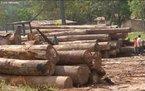 O desmatamento da floresta amazônica provoca problemas sérios ao meio ambiente, como a morte ou até mesmo a extinção de espécies da fauna e da flora. Um levantamento feito pelo Ministério do Meio Ambiente indica que 80% da madeira que sai da região é proveniente de exploração criminosa de terras públicas. </br></br> Palavras-chave: Dimensão Socioambiental. Econômica do Espaço Geográfico. Território. Lugar. Região. Região Norte. Amazônia. Desmatamento. Floresta Amazônica. Fauna. Flora. Queimadas. Recursos Naturais.