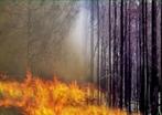 Um incêndio florestal é um fogo incontrolado em zonas naturais, bosques e lugares com abundante vegetação. Podem-se produzir por relâmpagos, descuidos humanos e em muitas ocasiões são intencionais. </br></br> Palavras-chave: Dimensão Socioambiental do Espaço Geográfico. Território. Lugar. Região. Floresta. Queimadas. Incêndio Florestal.