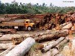 A devasta��o florestal e as queimadas preocupam brasileiros e ambientalistas do mundo todo, pois interferem na fauna, destr�em esp�cies da flora, contribuem para a polui��o da �gua, do ar, para as chuvas �cidas, o efeito estufa e a comercializa��o ilegal de madeiras nobres.  </br></br>  Palavras-chave: Florestas. Meio Ambiente. �gua. Efeito estufa. Queimadas. Madeiras nobres.