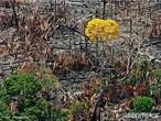A devastação florestal e as queimadas preocupam brasileiros e ambientalistas do mundo todo, pois interferem na fauna, destróem espécies da flora, contribuem para a poluição da água, do ar, das chuvas ácidas, do efeito estufa e a comercialização ilegal de madeiras nobres.  </br></br>  Palavras-chave: Florestas. Meio Ambiente. Água. Efeito Estufa. Queimadas.