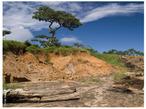A eros�o � um processo de deslocamento de terra ou de rochas de uma superf�cie. Ela pode ocorrer por a��o de fen�menos da natureza ou do ser humano. </br></br> Palavras-chave: Eros�o. Mata Ciliar. Sedimentos. Solos. Antropiza��o.