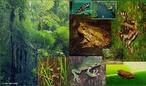 A fauna brasileira não conta com espécies de grande porte, semelhantes às que se encontram nas savanas e selvas da África. Na selva amazônica existe uma abundante fauna de peixes e mamíferos aquáticos que habitam os rios e lagos. As espécies mais conhecidas são o pirarucu e o peixe-boi (este em vias de extinção).  </br></br> Palavras-chave: Dimensão Socioambiental. Território. Lugar. País. Fauna. Floresta. Flora. Clima. Animais.