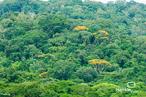 Paisagem: Floresta Amazônica
