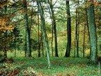 Floresta Temperada é um bioma encontrado nas regiões entre os polos e trópicos da Terra de clima temperado, especialmente no leste da América do Norte, Europa, leste da Ásia, sul da Austrália e Chile. Os índices pluviométricos são, em média, de 75 a 100 cm por ano e o solo das florestas temperadas são bastante ricos em nutrientes. Nesse bioma, as quatro estações são bem definidas. Ao longo do ano, a temperatura média é amena, sendo que no verão o calor e a umidade se elevam bastante.Existem dois tipos de florestas temperadas. O aspecto que as diferencia é a ocorrência ou não da queda das folhas no inverno. </br></br> Palavras-chave: Floresta Temperada. Biomas. Clima Temperado. Chuvas. Regiões. Vegetação.