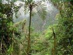 A Floresta Tropical ocorre em três regiões na Terra: na americana, na africana e na indo-malaia. No caso da americana cobre a Mata Atlântica compreendida pelo Brasil, indo ao sul até à bacia do Prata. A floresta indo-malaia é a menos contínua devido à agressão milenar que vem sofrendo; compreende a da costa da Indochina, a costa norte da Austrália, as Filipinas, Nova Guiné e Bornéu, entre outras. Este bioma é composto por grande quantidade de espécies vegetais e animais, apesar do solo ser muito pobre; esta pobreza se deve ao fato de haver uma camada de areia facilitando a infiltração rápida da água, mas ocorre a decomposição da matéria orgânica (folhas, fezes e restos de seres vivos) propiciada pela sombra, calor e umidade, formando-se uma camada de cerca de 50 centímetros de húmus. A temperatura média anual é sempre em torno de 20°C, a pluviosidade anual é de aproximadamente 1.200 mm, sua localização fica entre os trópicos, daí a denominação de floresta tropical. </br></br> Palavras-chave: Floresta Tropical. Brasil. Mata Atlântica. Bioma. Umidade. Calor. Temperaturas. Vegetação.