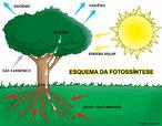 """A palavra """"fotossíntese"""" significa """"síntese que usa luz"""". Pode-se definir como fotossíntese a atividade vital que as plantas realizam em função da luz solar, transformando a energia luminosa em energia química. Através da clorofila, composto presente nas folhas, a seiva bruta é transformada em seiva elaborada através do processo de fotossíntese. A reação da fotossíntese é baseada no processamento do dióxido de carbono (CO2), água (H2O) e sais minerais (xilema) em compostos orgânicos, produzindo oxigênio gasoso (O2) e glicose (C6H12O6), compondo a seiva elaborada. </br></br> Palavras-chave: Fotossíntese. Energia. Compostos Orgânicos. Meio ambiente."""