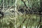 Origina-se a partir do encontro das �guas doce e salgada, formando a �gua salobra. Os mangues ou manguezais s�o considerados ecossistemas costeiros, eles aparecem nas regi�es tropicais e subtropicais. </br></br> Palavras-chave: Ecossistemas. Vegeta��o. �gua. Bioma.