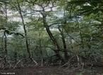 O Brasil tem uma das maiores extensões de manguezais do mundo: desde o Cabo Orange no Amapá até o município de Laguna em Santa Catarina. Hoje em dia o manguezal ocupa uma superfície total de mais de 10.000 km², a grande maioria na Costa Norte. O Estado de São Paulo tem mais de 240 km² de manguezal. No passado, a extensão dos manguezais brasileiros era muito maior: muitos portos, indústrias, loteamentos e rodovias costeiras foram desenvolvidos em áreas de manguezal. </br></br> Palavras-chave: Dimensão Socioambiental e Econômica do Espaço Geográfico. Território. Lugar. País. Mangue. Biodiversidade.