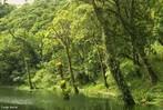 O processo de degrada��o das forma��es ciliares, al�m de desrespeitar a legisla��o, que torna obrigat�ria a preserva��o das mesmas, resulta em v�rios problemas ambientais. As matas ciliares funcionam como filtros, retendo defensivos agr�colas, poluentes e sedimentos que seriam transportados para os cursos d'�gua, afetando diretamente a quantidade e a qualidade da �gua e, consequentemente, a fauna aqu�tica e a popula��o humana. S�o importantes tamb�m como corredores ecol�gicos, ligando fragmentos florestais e, portanto, facilitando o deslocamento da fauna e o fluxo g�nico entre as popula��es de esp�cies animais e vegetais. Em regi�es com topografia acidentada, exercem a prote��o do solo contra os processos erosivos. </br></br> Palavras-chave: Mata Ciliar. Vegeta��o. Degrada��o. Ecossistema. Meio Ambiente. Preserva��o.