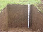 Nitossolos são solos profunsos (1 a 2 m) e bem drenados com bom potencial de utilização. São predominantes em 15% do território paranaense, principalmente nas regiões de rochas basálticas (norte, oeste e sudoeste do estado) e em relevos moderadamente declivosos.</br></br>No Paraná, são, em sua maioria, de boa fertilidade, embora possam ocorrer em relevos mais acidentados que prejudicam a mecanização dos solos ou aumentam o risco de erosão.</br></br>Palavras-chave: Solo. Nitossolo. Paraná. Agricultura. Economia. Erosão. Rochas. Basalto. Relevo.